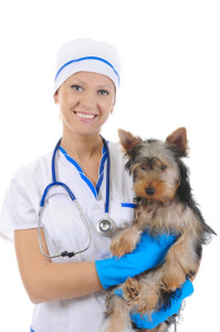 Veterinary Practice Loans Financing for Veterinarians In Corona CA